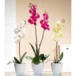 Orchidea kaspóban led világítással